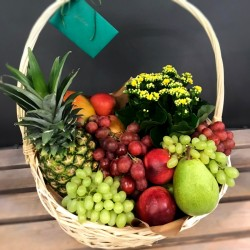 Fruit Basket with a plant