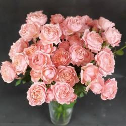 Pink roses Julietta
