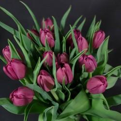 Burgundy tulips