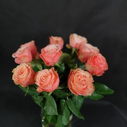 Light pink roses 50/70cm