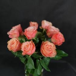 Gaiši rozīgas rozes 50/70cm