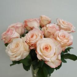 Light orange roses 40/60cm