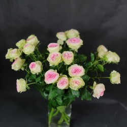 Розовые Spray розы 60см