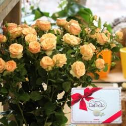 Bush Roses + Rafaello