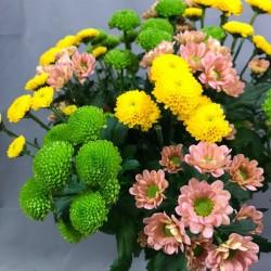 Chrysanthemum Santini mix