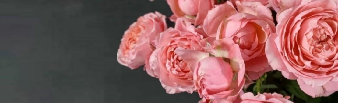 Rožu piegāde